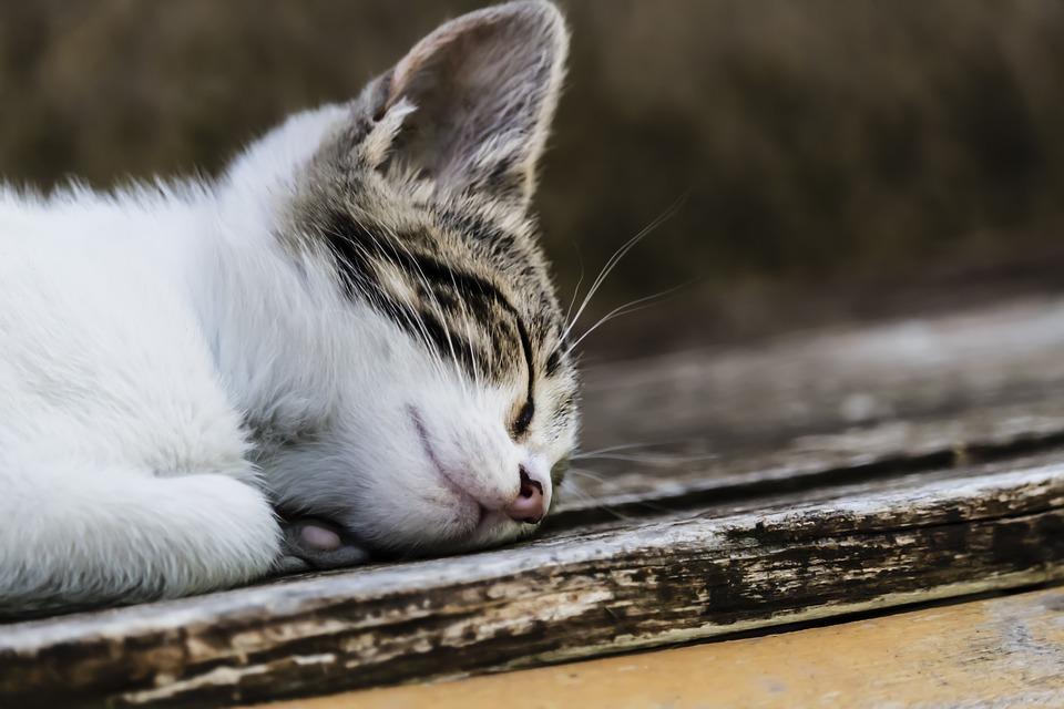 Passiamo 1_3 della vita dormendo facciamolo bene.jpg